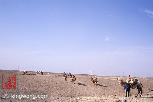 嘉峪关 - 骆驼,马 Jiayuguan (Jiayu Pass) - Camels and Horses