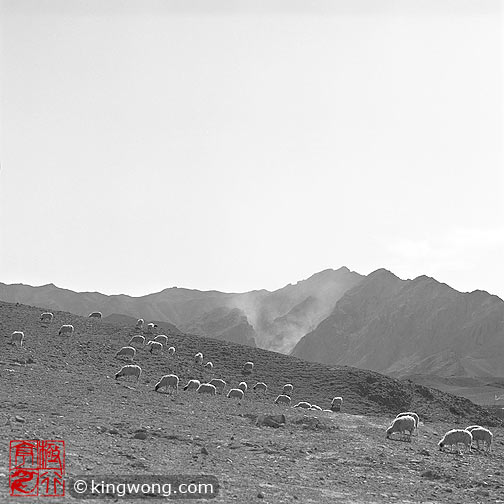 三关口长城 Sanguankou Great Wall - sheeps