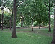 Picture of 纽约市中央公园 New York City Central Park