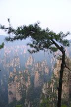 Picture of 天子山 Tianzi Mountains
