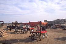 Picture of 高昌故城 - 驴车 Gaochang Ruins - Donkey Cart